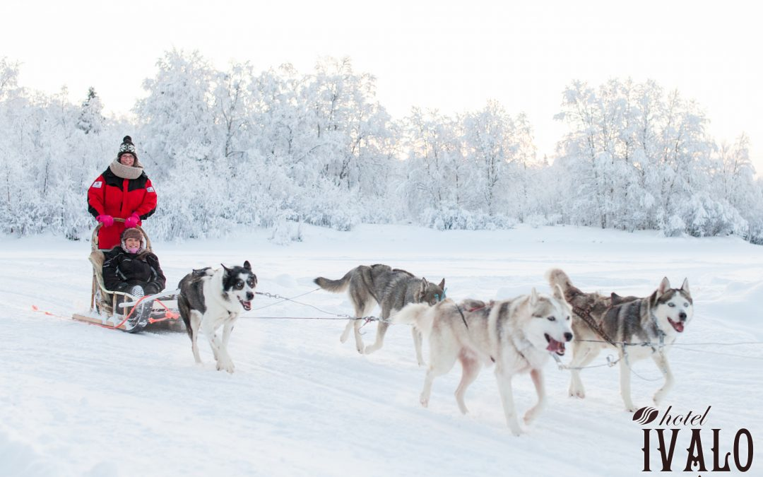 Husky Safari in the Lappish Nature 1 hour