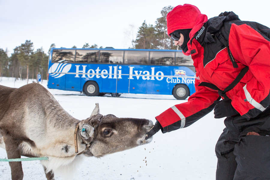 Feeding-Reindeer-and-Bus-900x600