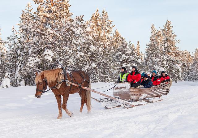 Horse Sledge Ride
